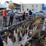 Depave-W&S_Planting11
