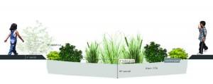 LEWIS section_Rain garden