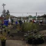 Saint Mary Planting12